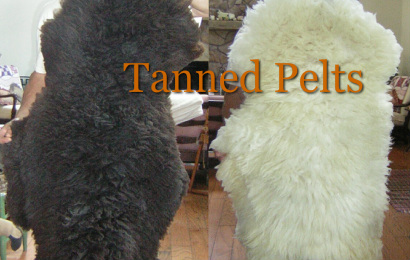 Tanned Pelts for Sale - hearts of the meadow farm